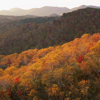 LIFESTYLE: BEST PLACES IN ASIA FOR FALL FOLIAGE AND WHAT TO WEAR
